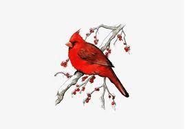 Winter Cardinal Free Download Png